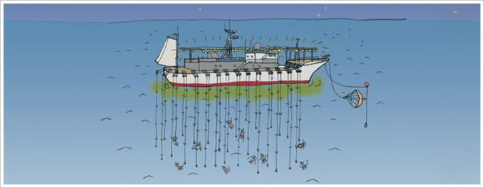 遠洋イカ釣り漁イラスト