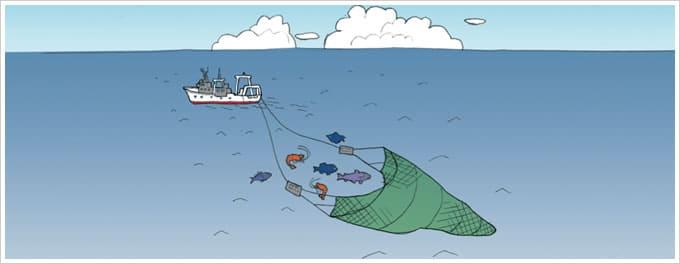 遠洋トロール漁イラスト