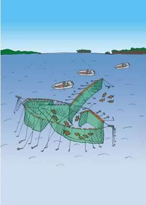 定置網漁イラスト