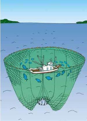 まき網漁イラスト