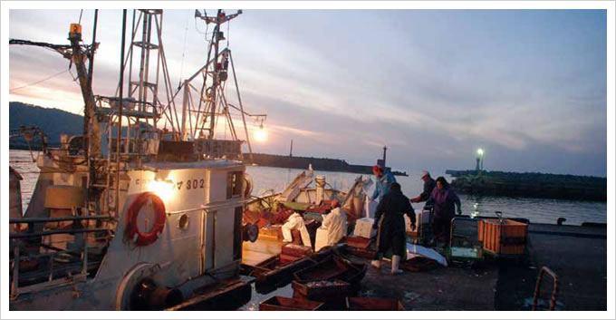 小型底曳き網漁 | 漁師.jp:全国漁業就業者確保育成センター