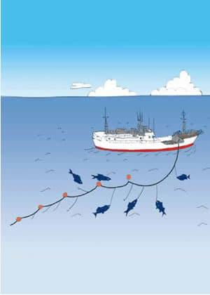 近海マグロはえ縄漁イラスト