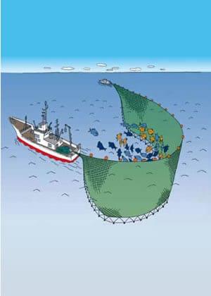 大中型まき網漁イラスト