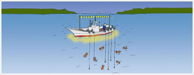 沿岸イカ釣り漁イラスト