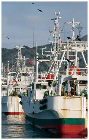 沖合底曳き網漁