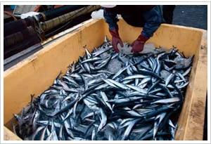 サンマ棒受け網漁