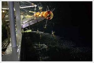 沖合イカ釣り漁