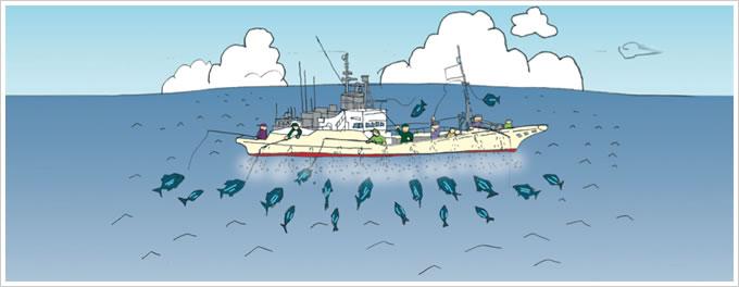 近海カツオ一本釣り漁イラスト