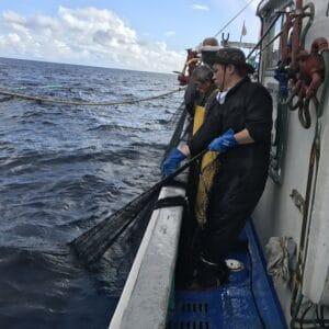 漁業体験の様子
